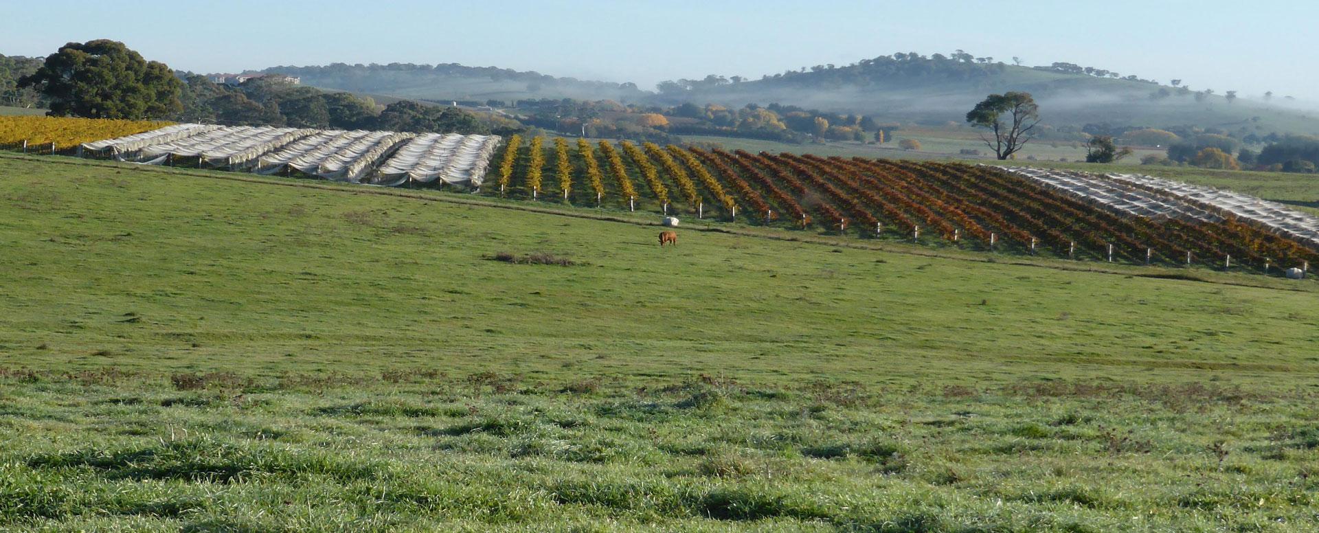 Patina vineyards
